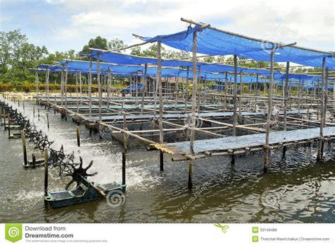 grouper farm thailand royalty