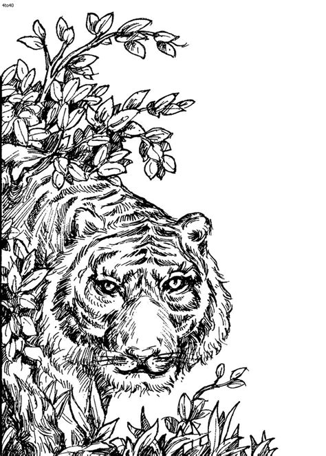 98 best images about Wild Animals Coloring Pages on Pinterest | Coloring, Coloring books and