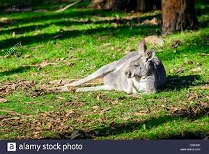 Auf Boden Schlafen : australian animal stockfotos australian animal bilder alamy ~ Watch28wear.com Haus und Dekorationen