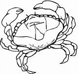 Crab Coloring Pages Crabs Drawing Printable Sheet Template Animal Marine Animals Sketch Seaweed Paper sketch template