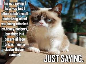 Grumpy cat, grumpy cat meme, grumpy cat quotes, funny ...
