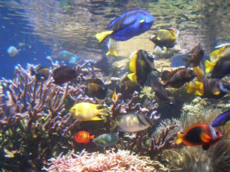 gt wallpaper fond d ecran aquarium