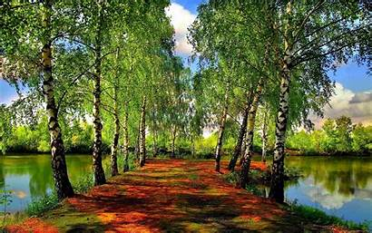 Spring Wallpapers Nature Forest Seasons