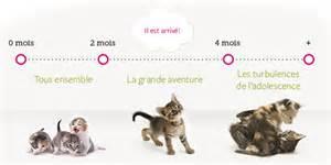 Combien De Vie A Un Chat by D 233 Couvrez Le Cycle De Vie Du Chaton