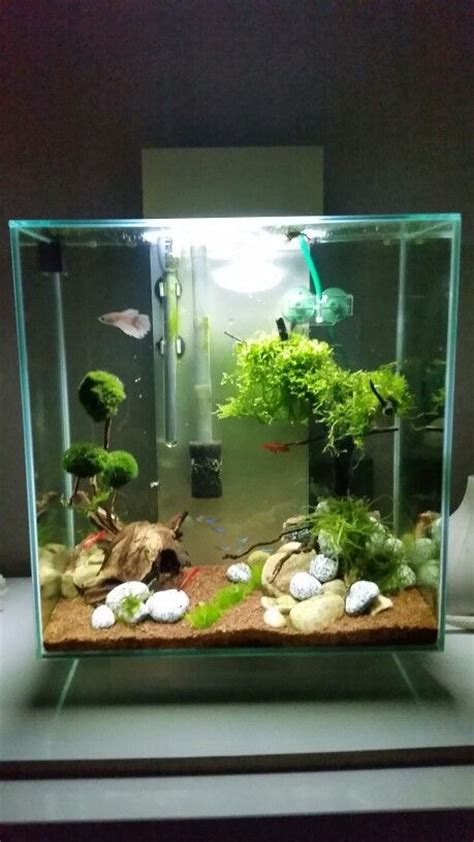 Aquascaping Fluval Edge 2  Dufte  Pinterest Aquariums