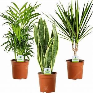Indoor, Plant, Mix, -, 3, Plants, -, House, Office, Live, Potted, Pot, Plant, Tree, Mix, D