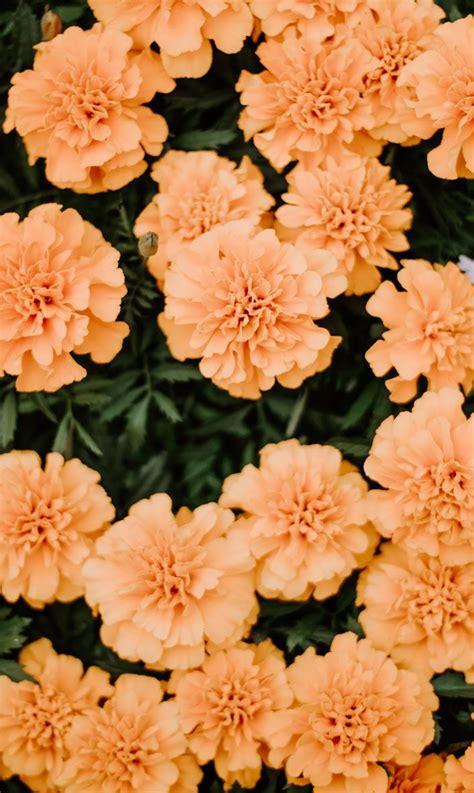 flowers aesthetic wallpapers