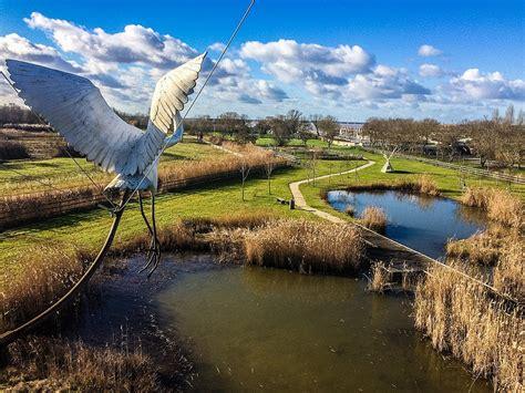 Photos D Oiseaux • Les plus belles photos par Bonjour Nature
