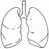 Lung sketch template