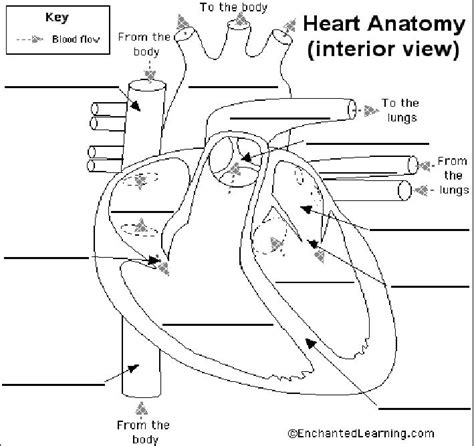 blood flow   heart heart diagram heart diagram