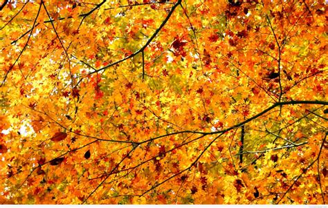Autumn Wallpapers Hd by Autumn Wallpapers Backgrounds With Quotes Hd