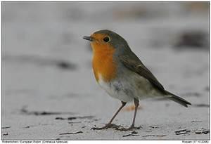 Vogel Mit Roter Brust : gr10 grrk171006 9619 ~ Eleganceandgraceweddings.com Haus und Dekorationen