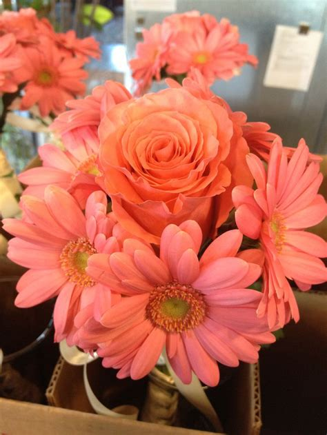 bridesmaids bouquet coral gerber daisies and coral rose