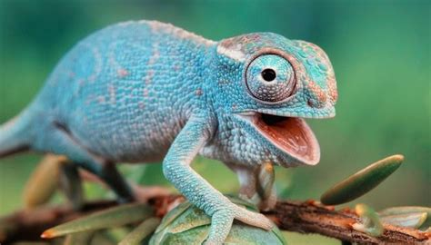 chameleons changing colors engineers create chameleon inspired color changing skin
