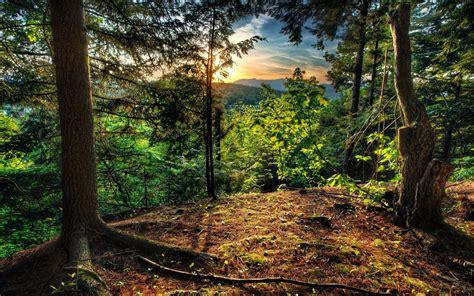 Forest Wallpaper Nature Landscape 13