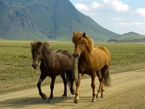 land fastest animals horse ever speed record mph gallop average order endurance horses