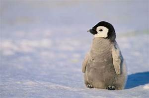 Services Invoices 10 Cool Facts About Penguins City Of Albuquerque