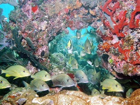 mapping marine ecosystems national geographic society