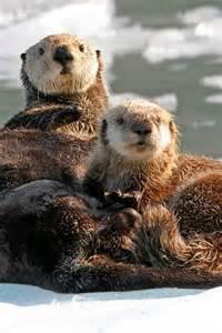 Sea Otters Animals