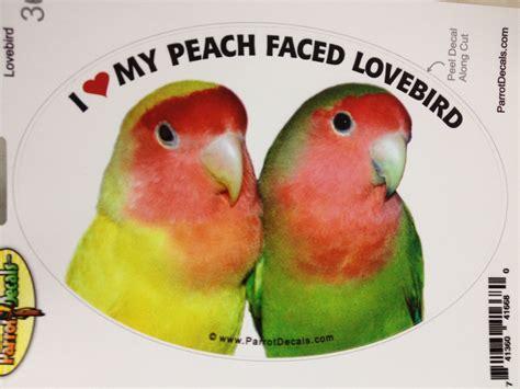 Sun Conure Bird PNG