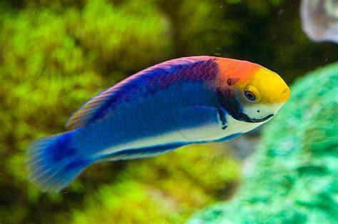 small fish for aquarium selecting fish suitable for small saltwater aquariums