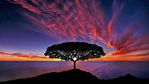 Sunset, Tree, Silhouette, Blue, Sky, Red, Clouds, Ocean, Horizon