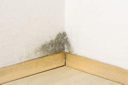 warum schimmel im schlafzimmer wie entstehen schimmelpilze ecofort