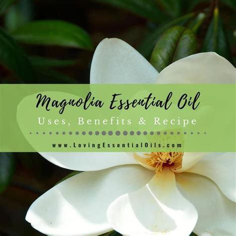 magnolia essential oil  benefits recipes eo spotlight