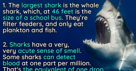 jaw dropping facts  sharks  words