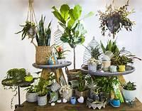 house plants pictures Indoor Plants | BATH GARDEN CENTER