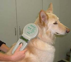 microchipping of dogs has your pet been done