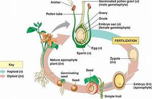 plant reproductive structure Quotes