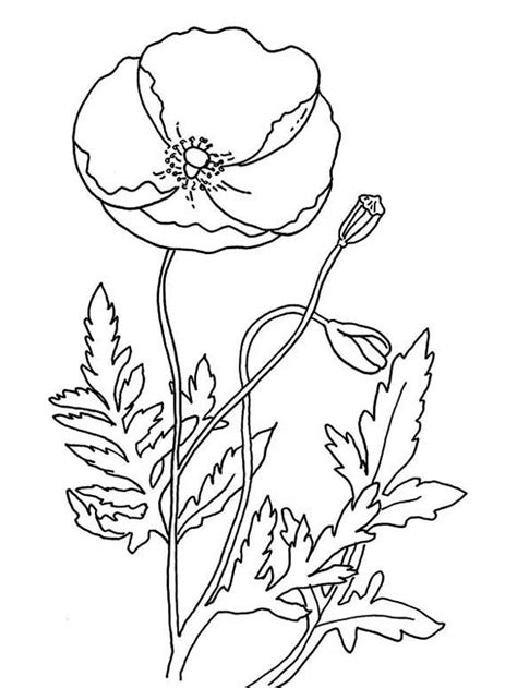 remembrance day  poppy coloring page color luna