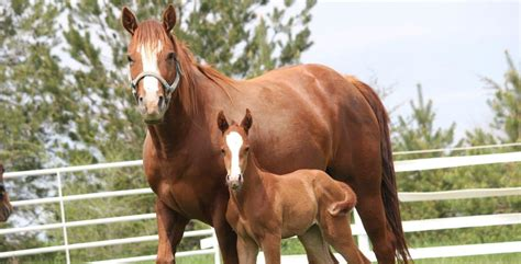 horse horses animal mom science exerciser extension animals kick system baby hooves animalscience horse3 riding advantages enviornment vital using equine