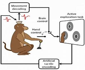Monkeys Move + Feel Virtual Objects With Just Their Brains ...