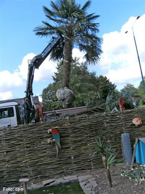 comment transplanter son palmier la palmeraie fr