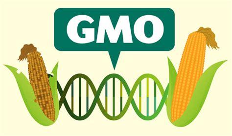 Why the GMO debate still matters - New Food Magazine