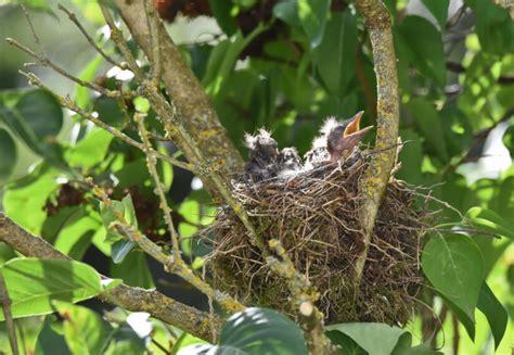 Garten Vogelfreundlich Gestalten v 246 gel anlocken so gestalten sie ihren garten vogelfreundlich
