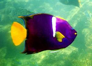 10 Facts About Angelfish Fact File