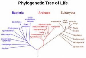 Biology - Wikipedia, the free encyclopedia