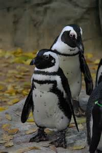 Penguin Animals