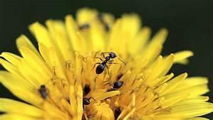 Ameisen Im Garten : ameisen bek mpfen im garten nat rlich mit hausmitteln wohnen ~ Frokenaadalensverden.com Haus und Dekorationen