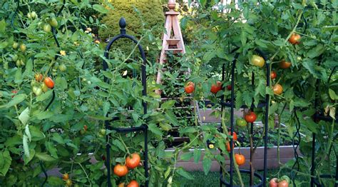 late summer vegetable garden private newport