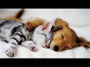 Top 10 Cats and Dogs best friends - YouTube