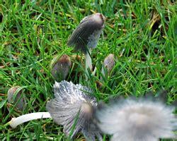 Pilze Im Rasen Loswerden by Pilze Im Rasen Wieder Loswerden Ursachen F 252 R Pilze Im Rasen