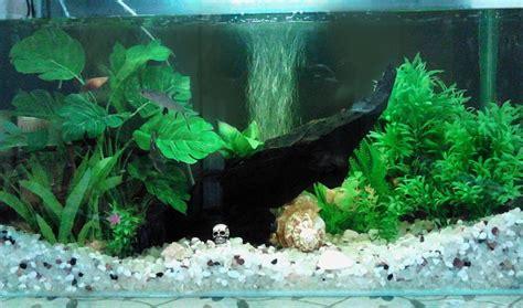 best aquarium gravel for live plants aquarium design ideas