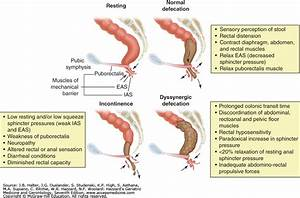 pelvic floor dyssynergia carpet review With pelvic floor dyssynergia causes