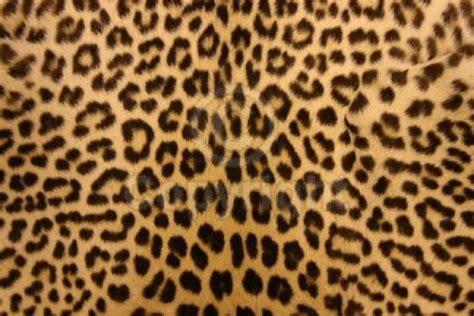Animal Print Wallpaper - animal print desktop backgrounds wallpaper cave