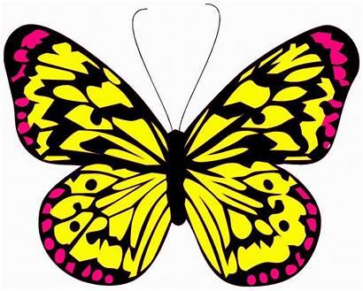 Butterfly Colorful Publicdomainpictures Domain
