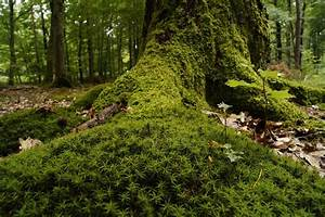 Free Photo  Forest  Wood  Moss  Undergrowth